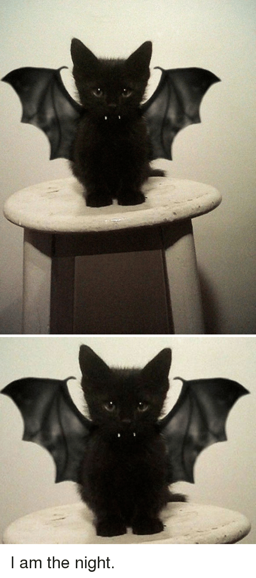 I Am The Night: <p>I am the night.<br/></p>