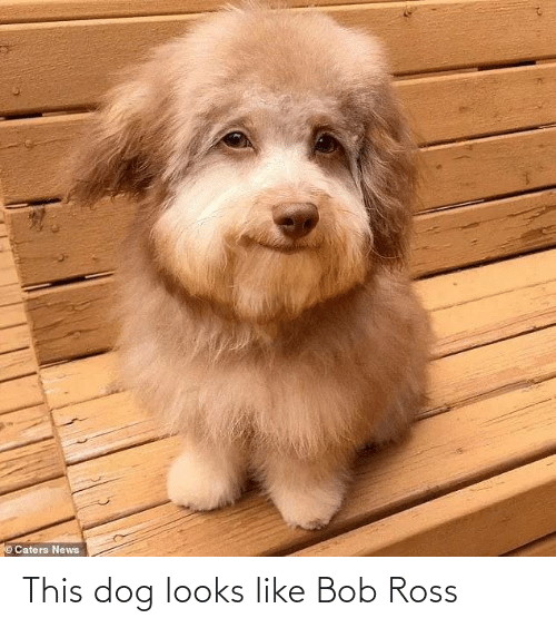 Dog: ©Caters News This dog looks like Bob Ross