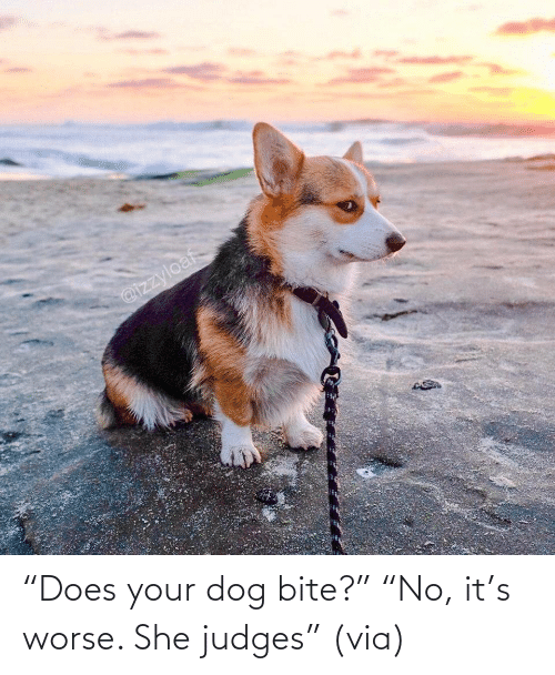 "Its: ""Does your dog bite?"" ""No, it's worse. She judges"" (via)"