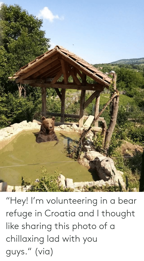 "lad: ""Hey! I'm volunteering in a bear refuge in Croatia and I thought like sharing this photo of a chillaxing lad with you guys."" (via)"