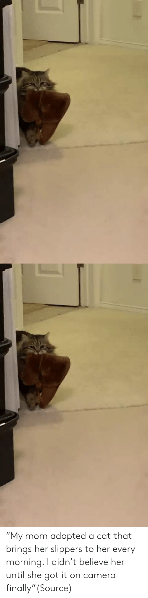 "my mom: ""My mom adopted a cat that brings her slippers to her every morning. I didn't believe her until she got it on camera finally""(Source)"