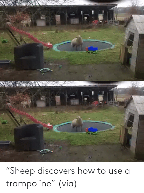 "How To: ""Sheep discovers how to use a trampoline"" (via)"