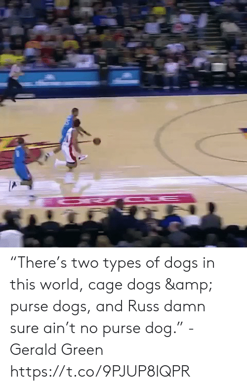 """Dogs, Memes, and World: """"There's two types of dogs in this world, cage dogs & purse dogs, and Russ damn sure ain't no purse dog."""" - Gerald Green  https://t.co/9PJUP8lQPR"""