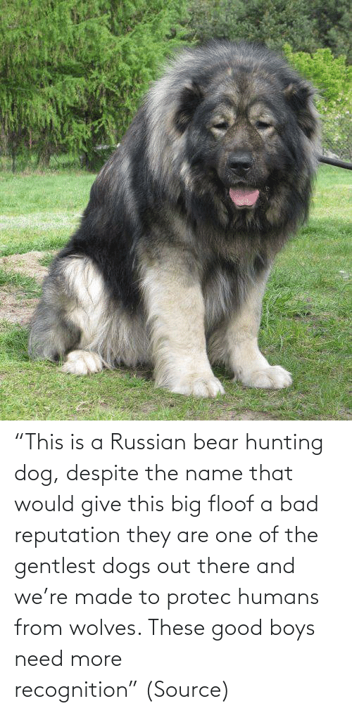 "Give: ""This is a Russian bear hunting dog, despite the name that would give this big floof a bad reputation they are one of the gentlest dogs out there and we're made to protec humans from wolves. These good boys need more recognition"" (Source)"