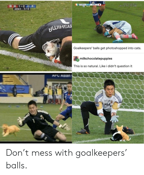 Cats, Fifa, and Live: ワールトドカップ  -3-0-1  645:25  FIFA 7-JUDE  E韓国 1-2日本  5:12  1U- 1 C LIVE  Goalkeepers' balls get photoshopped into cats.  milkchocolatepuppies  This is so natural. Like i didn't question it  ARCASIAN  PREAM Don't mess with goalkeepers' balls.