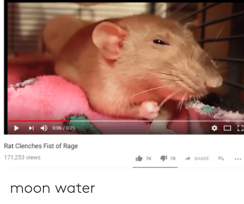 rage: 丨  4)  0:06 / 0:25  Rat Clenches Fist of Rage  71,253 views moon water
