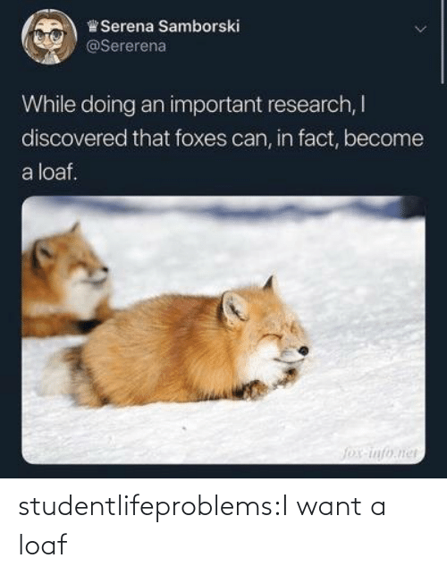 Become: ,)曾Serena Samborski  @Sererena  While doing an important research, I  discovered that foxes can, in fact, become  a loaf. studentlifeproblems:I want a loaf