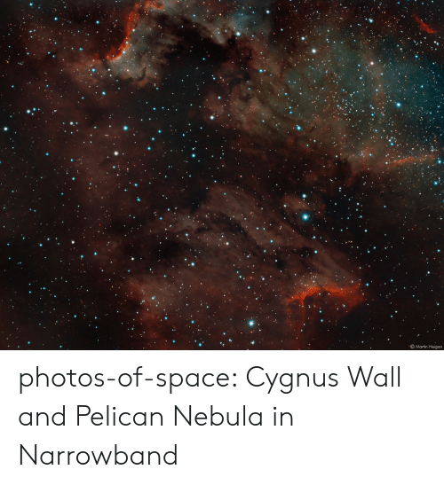 Martin, Tumblr, and Blog: 0  Martin Heigan photos-of-space:  Cygnus Wall and Pelican Nebula in Narrowband