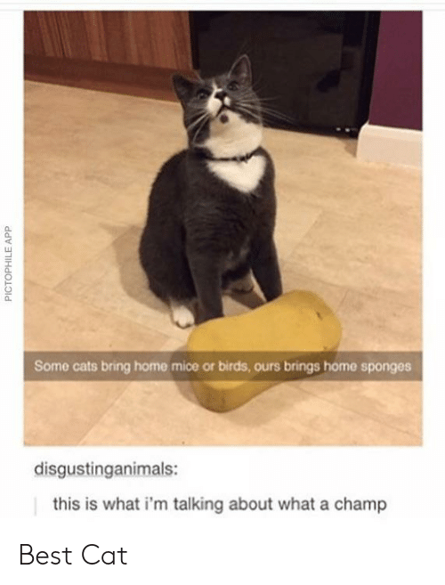 sponges: 0  Some cats bring home mice or birds, ours brings home sponges  disgustinganimals:  this is what i'm talking about what a champ Best Cat