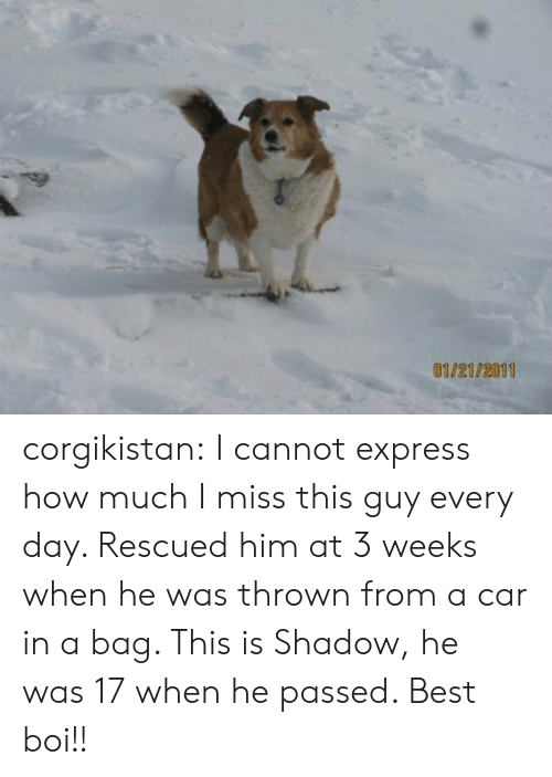 Tumblr, Best, and Blog: 0102182011 corgikistan:  I cannot express how much I miss this guy every day. Rescued him at 3 weeks when he was thrown from a car in a bag. This is Shadow, he was 17 when he passed. Best boi!!
