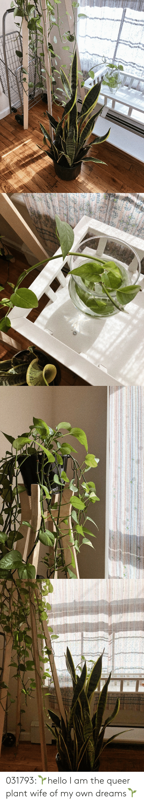 plant: 031793:🌱hello I am the queer plant wife of my own dreams🌱