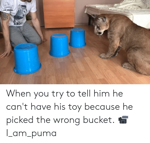 Dank, Puma, and 🤖: 1  AM When you try to tell him he can't have his toy because he picked the wrong bucket.  📹 I_am_puma