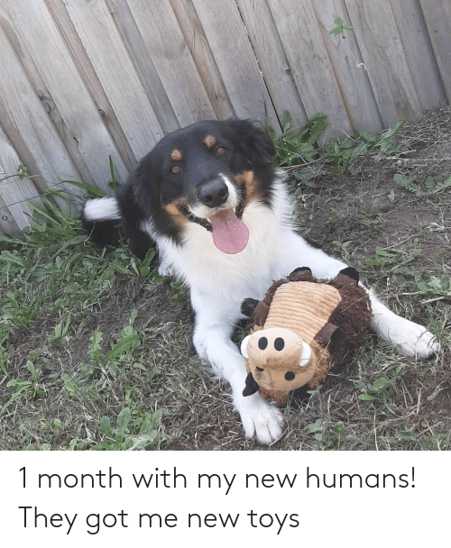 Toys: 1 month with my new humans! They got me new toys