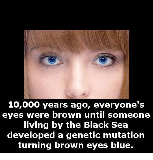 Brown Eye: 10,000 years ago, everyone's  eyes were brown until someone  living by the Black Sea  developed a genetic mutation  turning brown eyes blue.