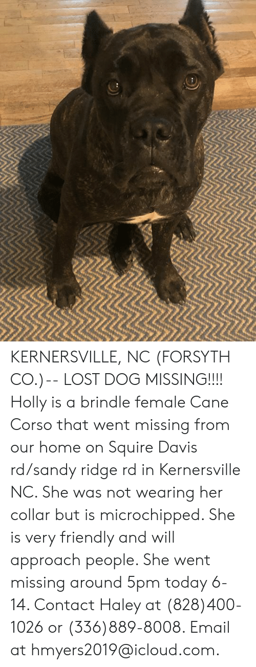Memes, Lost, and Email: 10 KERNERSVILLE, NC (FORSYTH CO.)-- LOST DOG  MISSING!!!! Holly is a brindle female Cane Corso that went missing from our home on Squire Davis rd/sandy ridge rd in Kernersville NC. She was not wearing her collar but is microchipped. She is very friendly and will approach people. She went missing around 5pm today 6-14. Contact Haley at (828)400-1026 or (336)889-8008. Email at hmyers2019@icloud.com.