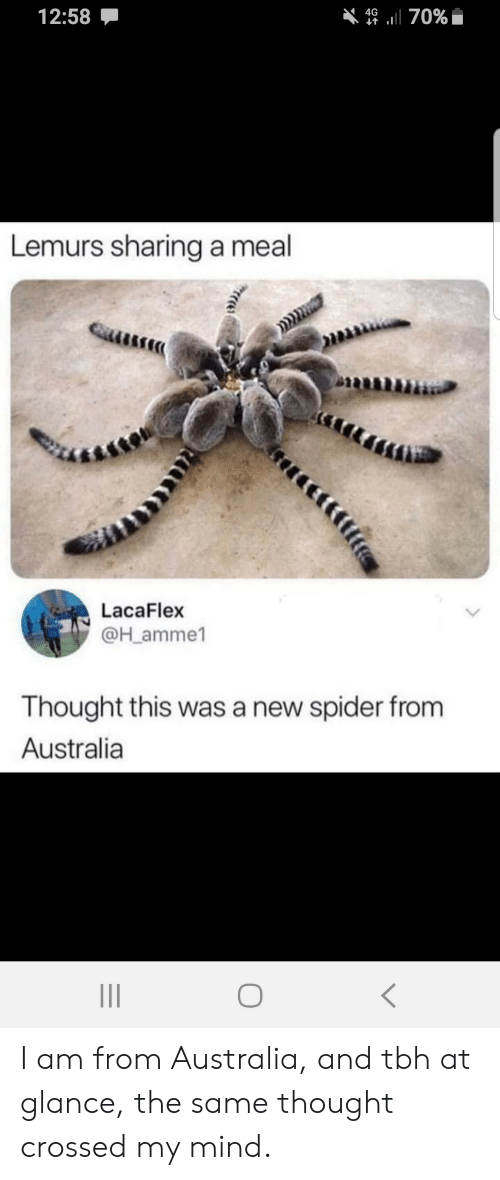 Spider, Tbh, and Australia: 12:58  4670%  Lemurs sharing a meal  LacaFlex  @H_amme1  Thought this was a new spider from  Australia I am from Australia, and tbh at glance, the same thought crossed my mind.