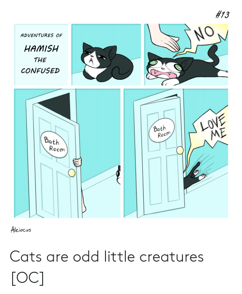 Cats, Confused, and Love:  #13  ADVENTURES OF  NO,  HAMISH  THE  CONFUSED  LOVE  ME  Bath  Room  Bath  Room  Aleiocus Cats are odd little creatures [OC]