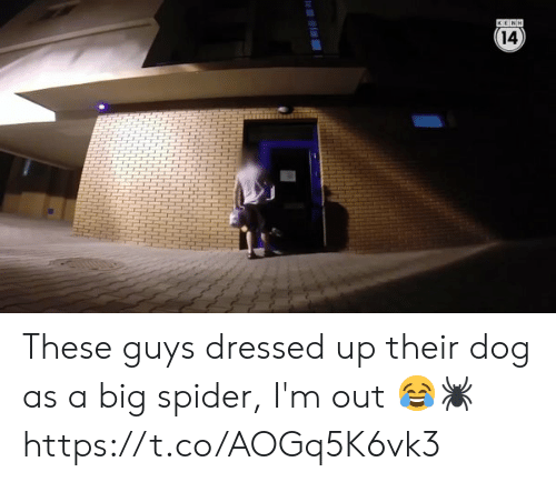 Dressed Up: 14  4  HHH These guys dressed up their dog as a big spider, I'm out 😂🕷 https://t.co/AOGq5K6vk3