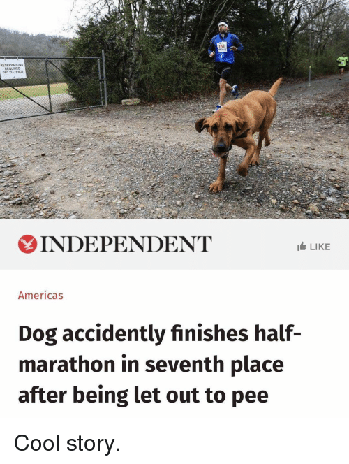 reservations: 151  RESERVATIONS  REQUIRED  DEC 1S-FE8 2  INDEPENDENT  LIKE  Americas  Dog accidently finishes half-  marathon in seventh place  after being let out to pee Cool story.