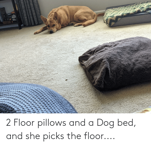 Floor: 2 Floor pillows and a Dog bed, and she picks the floor....