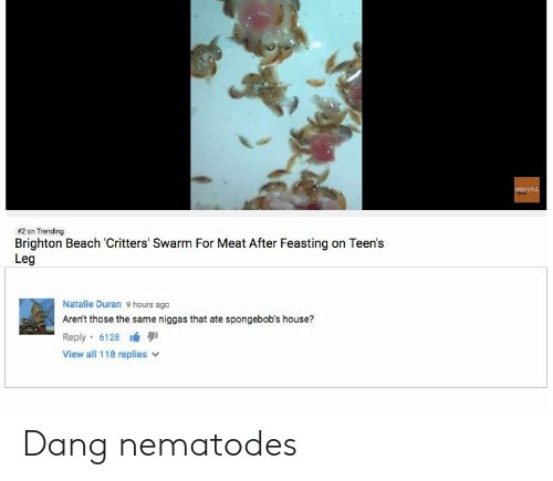 Brighton:  #2 on Trending  Brighton Beach Critters' Swarm For Meat After Feasting on Teen's  Leg  Natalie Duran 9 hours ago  Aren't those the same niggas that ate spongebob's house?  Reply-6128 lá 퀴  View all 118 replies v Dang nematodes
