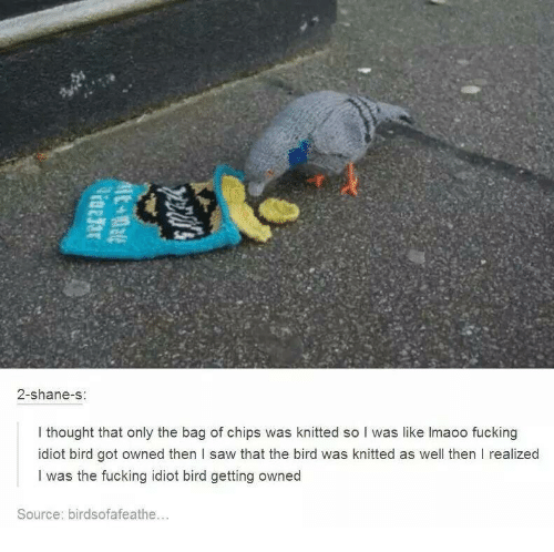 Fucking, Saw, and Idiot: 2-shane-s  I thought that only the bag of chips was knitted so I was like lmaoo fucking  idiot bird got owned then l saw that the bird was knitted as well then I realized  I was the fucking idiot bird getting owned  Source: birdsofafeathe...