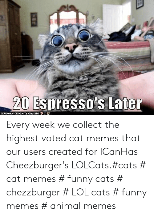 funny cats: 20 Espresso's Later  IGAN HAS CHEEZBURGER,00M Every week we collect the highest voted cat memes that our users created for ICanHas Cheezburger's LOLCats.#cats # cat memes # funny cats # chezzburger # LOL cats # funny memes # animal memes