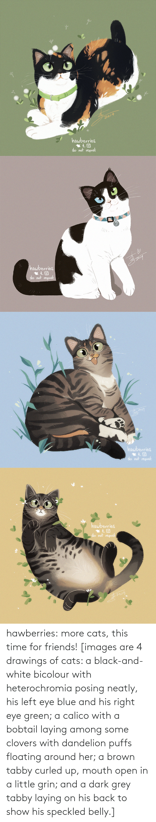 Among: 2019  hawberries  do not repost   hawberries  do not repost   hawberries  do not repost   hawberries  do not repost hawberries: more cats, this time for friends! [images are 4 drawings of cats: a black-and-white bicolour with heterochromia posing neatly, his left eye blue and his right eye green; a calico with a bobtail laying among some clovers with dandelion puffs floating around her; a brown tabby curled up, mouth open in a little grin; and a dark grey tabby laying on his back to show his speckled belly.]