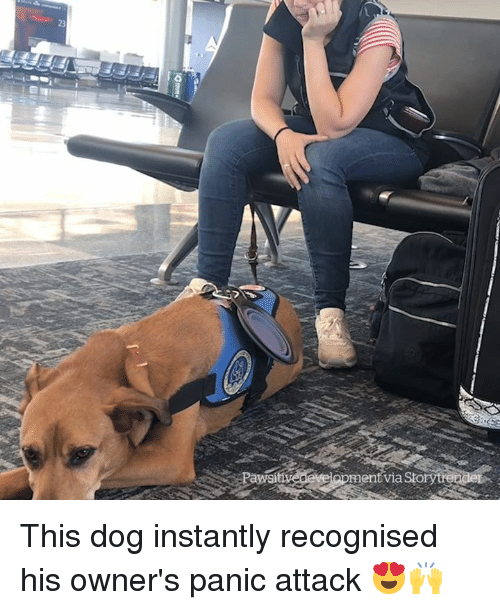 Sto, Dog, and Via: 23  Paws  ent via Sto This dog instantly recognised his owner's panic attack 😍🙌