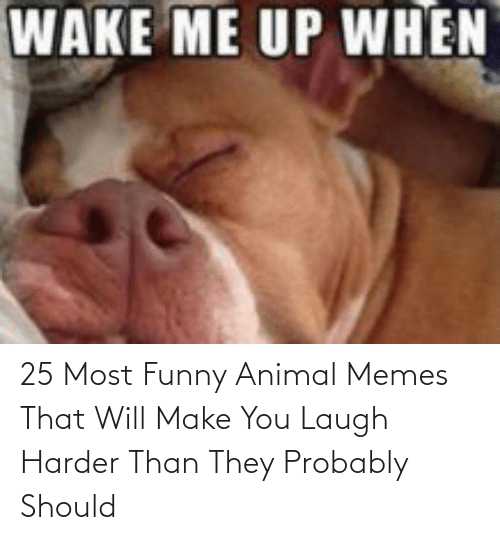 funny animal memes: 25 Most Funny Animal Memes That Will Make You Laugh Harder Than They Probably Should