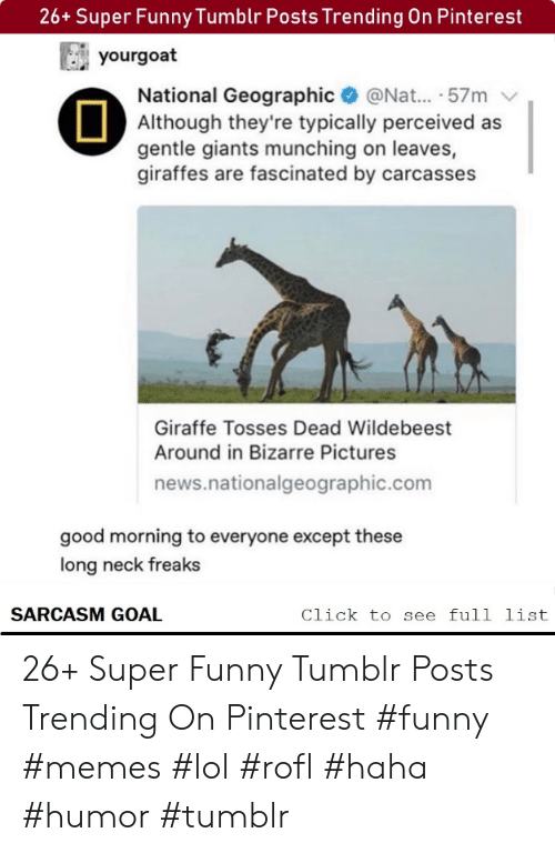 Geographic: 26+ Super Funny Tumblr Posts Trending On Pinterest  yourgoat  National Geographic@Nat... .57m  Although they're typically perceived as  gentle giants munching on leaves,  giraffes are fascinated by carcasses  Giraffe Tosses Dead Wildebeest  Around in Bizarre Pictures  news.nationalgeographic.com  good morning to everyone except these  long neck freaks  SARCASM GOAL  Click to see full list 26+ Super Funny Tumblr Posts Trending On Pinterest #funny #memes #lol #rofl #haha #humor #tumblr