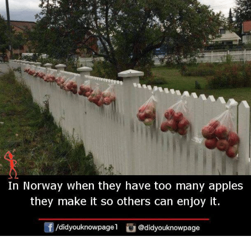 Memes, Norway, and 🤖: 2t  In Norway when they have too many apples  they make it so others can enjoy it.  f/didyouknowpagel@didyouknowpage