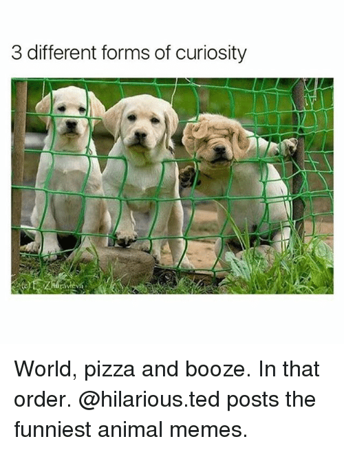 Funniest Animal: 3 different forms of curiosity World, pizza and booze. In that order. @hilarious.ted posts the funniest animal memes.
