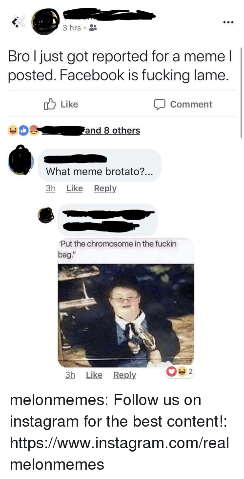 "What Meme: 3 hrs  Bro l just got reported for a meme l  posted. Facebook is fucking lame  Like  Comment  What meme brotato?  3h Like Reply  Put the chromosome in the fuckin  bag.""  Il  3h Like Reply melonmemes:  Follow us on instagram for the best content!: https://www.instagram.com/realmelonmemes"