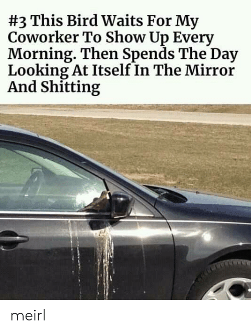 Mirror, MeIRL, and Looking:  #3 This Bird Waits For My  Coworker To Show Up Every  Morning. Then Spends The Day  Looking At Itself In The Mirror  And Shitting meirl