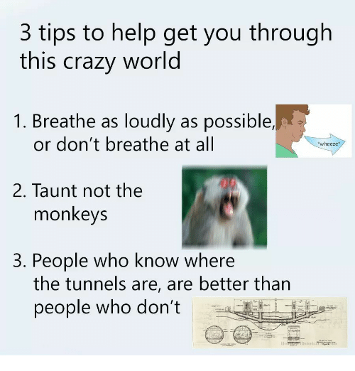 taunt: 3 tips to help get you through  this crazy world  1. Breathe as loudly as possible,  or don't breathe at all  wheeze*  2. Taunt not the  monkeys  3. People who know where  the tunnels are, are better than  people who don't