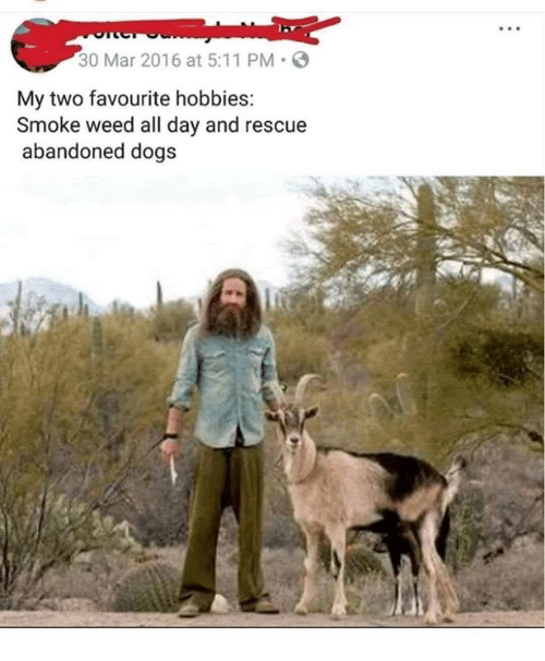 Dogs, Memes, and Weed: 30 Mar 2016 at 5:11 PM-  My two favourite hobbies:  Smoke weed all day and rescue  abandoned dogs