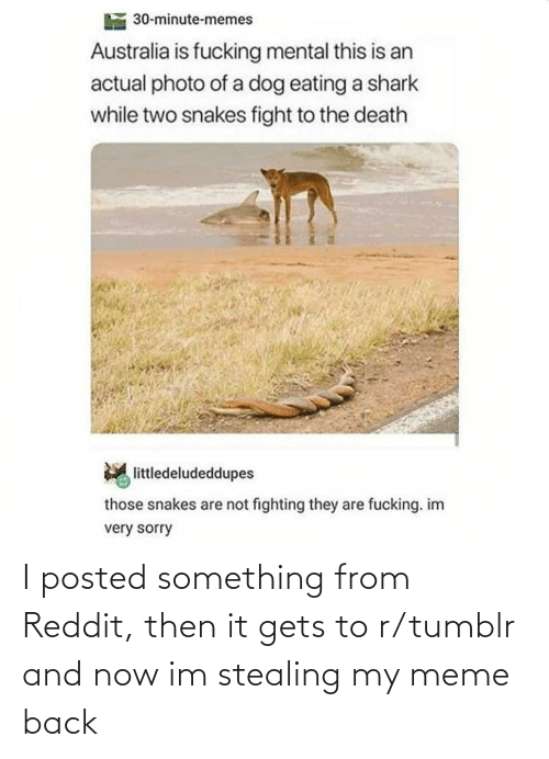 actual: 30-minute-memes  Australia is fucking mental this is an  actual photo of a dog eating a shark  while two snakes fight to the death  littledeludeddupes  those snakes are not fighting they are fucking. im  very sorry I posted something from Reddit, then it gets to r/tumblr and now im stealing my meme back