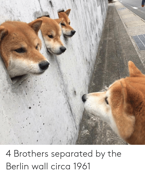 Berlin, Brothers, and Berlin Wall: 4 Brothers separated by the Berlin wall circa 1961