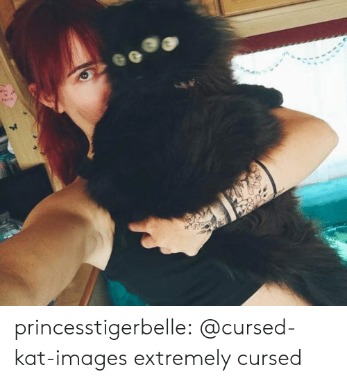 Tumblr, Blog, and Images: 41 princesstigerbelle:  @cursed-kat-images extremely cursed