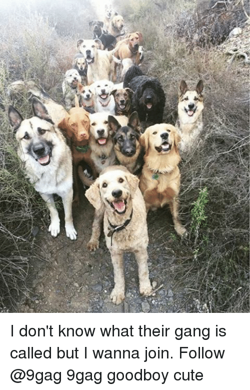 Goodboy: :4D I don't know what their gang is called but I wanna join. Follow @9gag 9gag goodboy cute