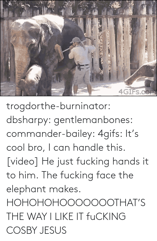 Hohoho: 4GĪFS.com trogdorthe-burninator:  dbsharpy:  gentlemanbones:  commander-bailey:  4gifs:  It's cool bro, I can handle this. [video]  He just fucking hands it to him. The fucking face the elephant makes.  HOHOHOHOOOOOOOTHAT'S THE WAY I LIKE IT    fuCKING COSBY JESUS