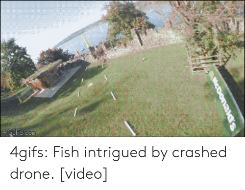 Drone: 4GIFs.com 4gifs:  Fish intrigued by crashed drone. [video]