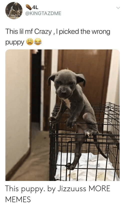 Crazy, Dank, and Memes: 4L  @KINGTAZDME  This lil mf Crazy , I picked the wrong  puppy  AK This puppy. by Jizzuuss MORE MEMES
