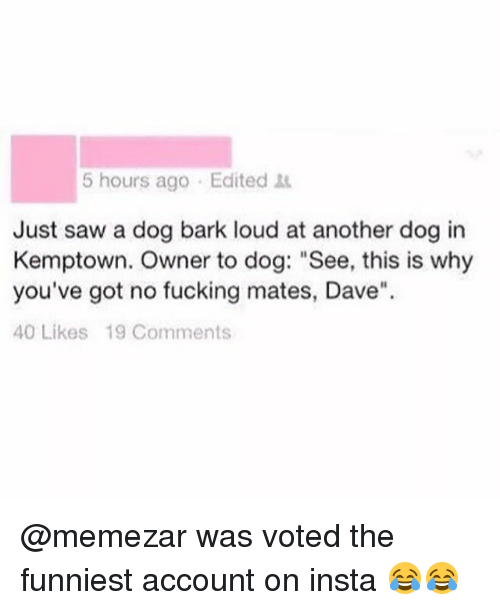 """Sawing: 5 hours ago Edited  Just saw a dog bark loud at another dog in  Kemptown. Owner to dog: """"See, this is why  you've got no fucking mates, Dave""""  40 Likes 19 Comments @memezar was voted the funniest account on insta 😂😂"""
