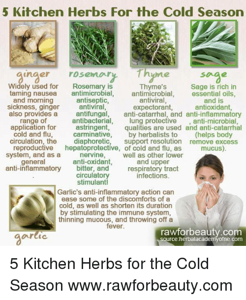 5 Kitchen Herbs for the Cold Season Inger Rosemary Hyme Soge