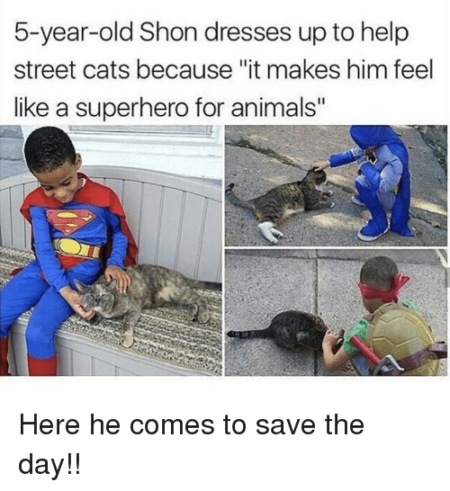 """Animals, Cats, and Superhero: 5-year-old Shon dresses up to help  street cats because """"it makes him feel  like a superhero for animals"""" <p>Here he comes to save the day!!</p>"""