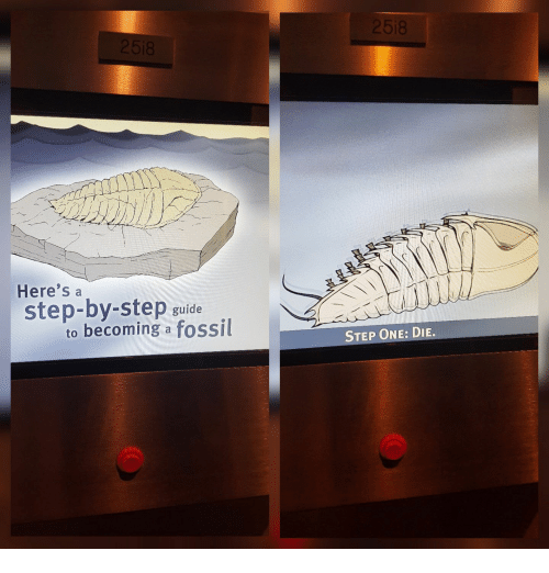 Fossil, Step, and One: 518  Here's a  step-by-step guide  to becoming a fossil  STEP ONE: DIE.