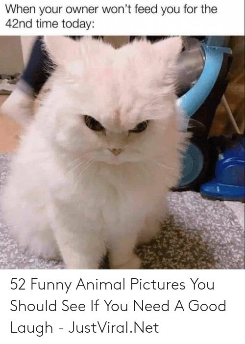 You Should: 52 Funny Animal Pictures You Should See If You Need A Good Laugh - JustViral.Net