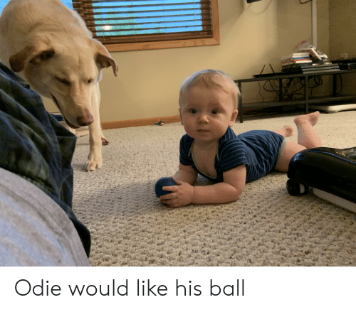 Ball, Like, and Odie: 544 Odie would like his ball